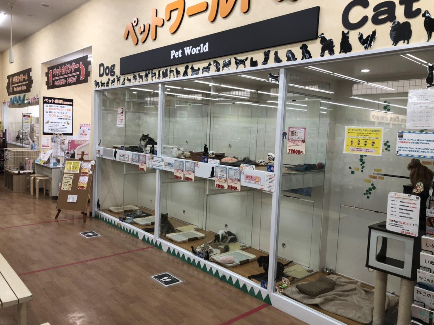 中津川坂本店